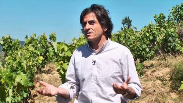 Comando G Viticultores