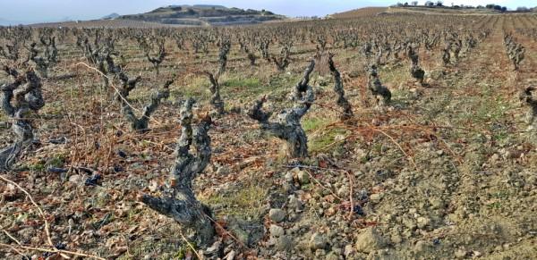 Rioja Alavesa en noviembre