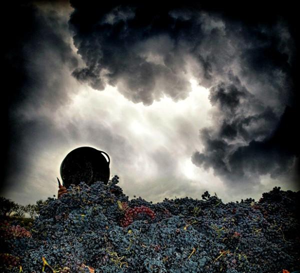 Curso sobre la influencia del cambio climático en el viñedo