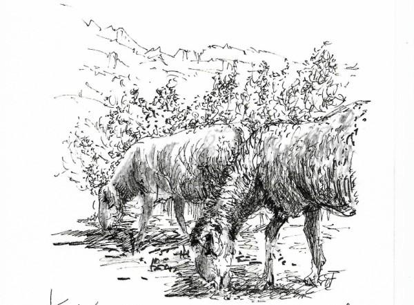 Caminante-ovejas-Bai