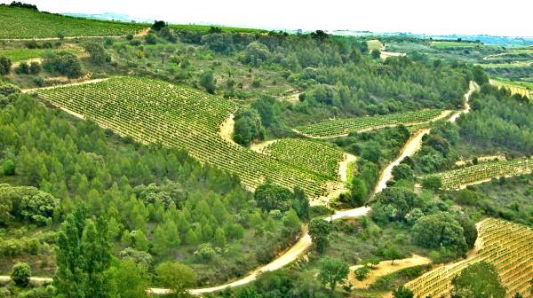 Paisaje del viñedo de Rioja Alavesa