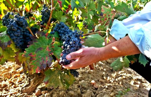 Cosecha de 2017 en Rioja Alavesa