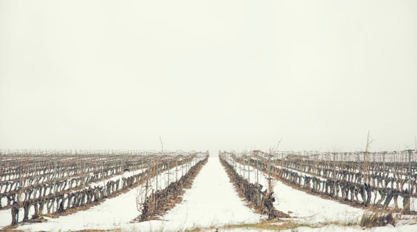 Invierno en Rioja Alavesa