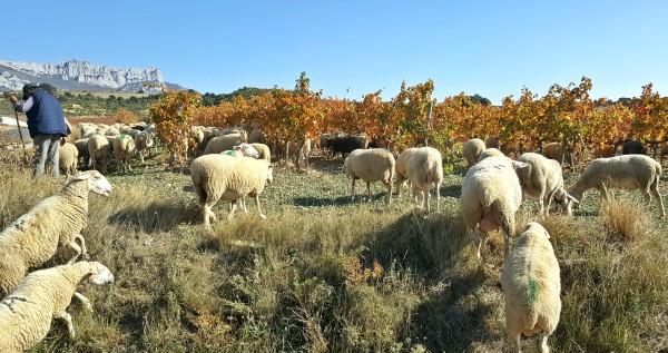 Pastores de Rioja Alavesa