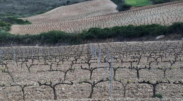 Vinas-Bargot