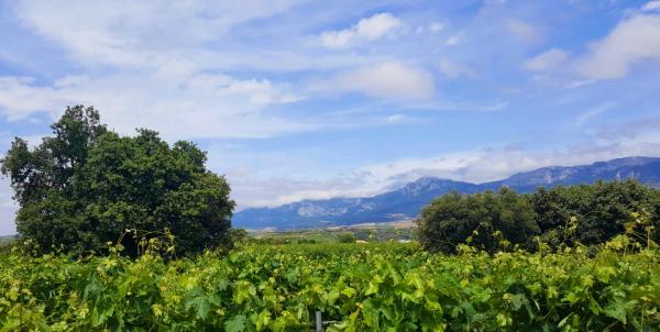 Encinas-Vinedos