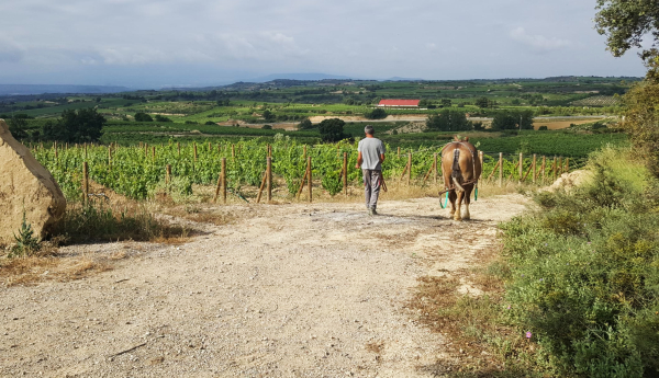 Camino-Lavina