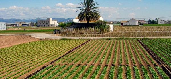 Huerta-valenciana