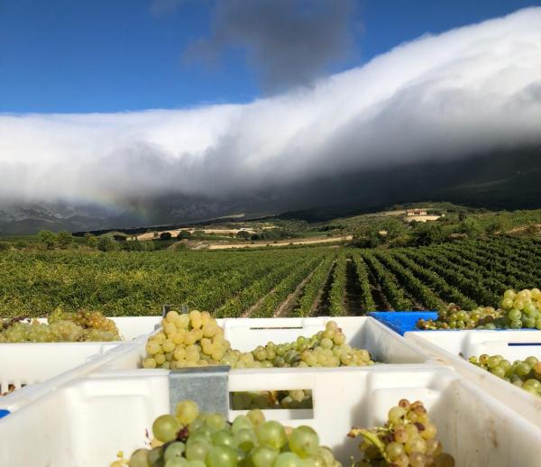 Uva de Rioja Alavesa