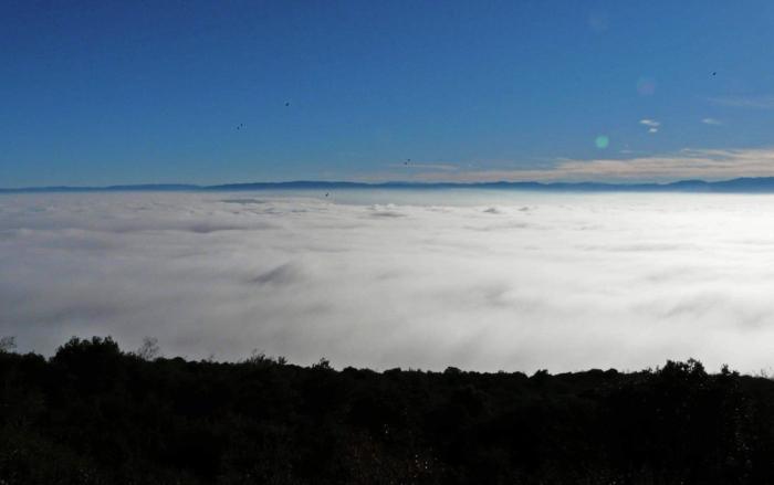 Niebla-Dos