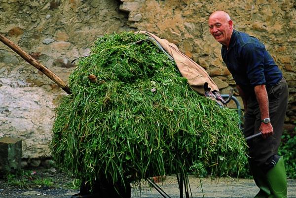 Carretilla-de-hierba