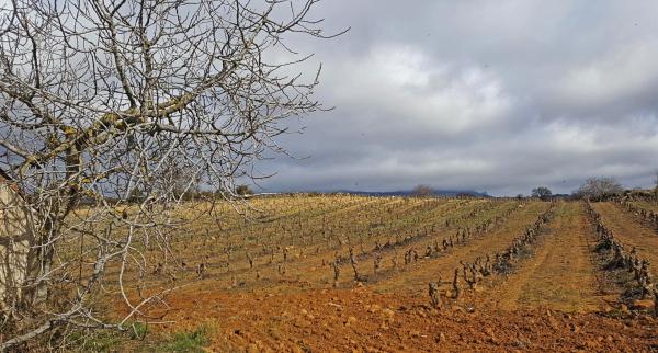 Campanarios de Rioja Alavesa