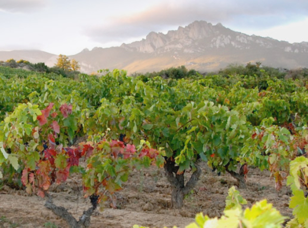 Vinas-Verdes-Otono