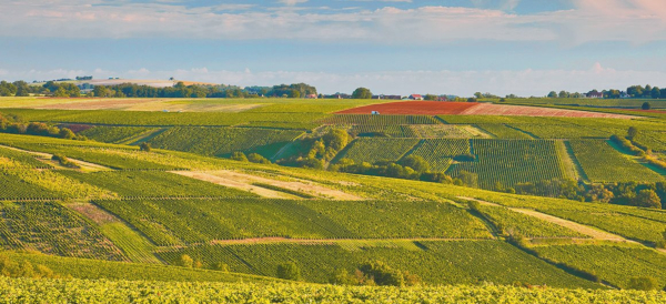 Vinedos-del-Loira