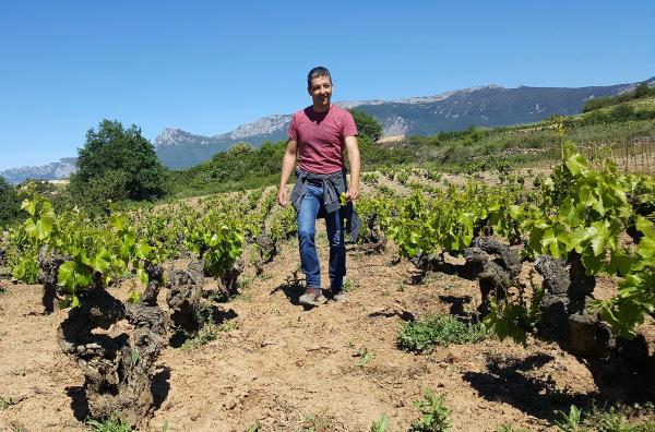 Agua sobre viñas de Rioja Alavesa
