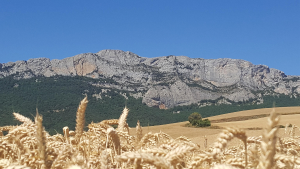 Sierra-mira-trigo