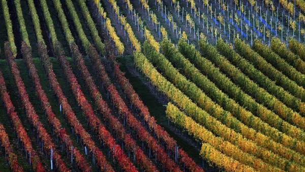 Vinedo-Alemania