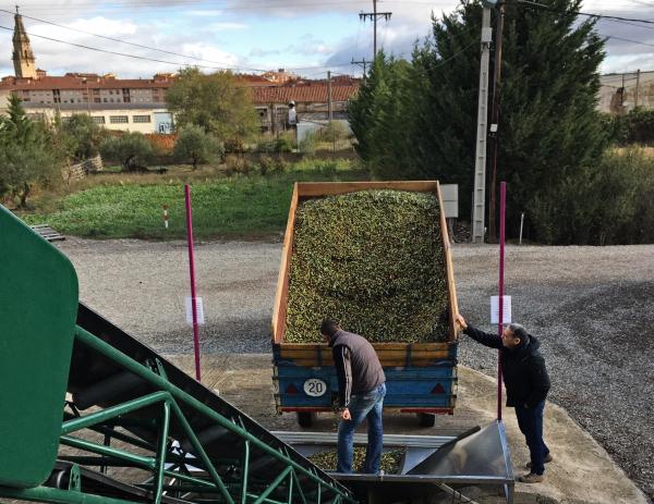 Olivocultores de Rioja Alavesa