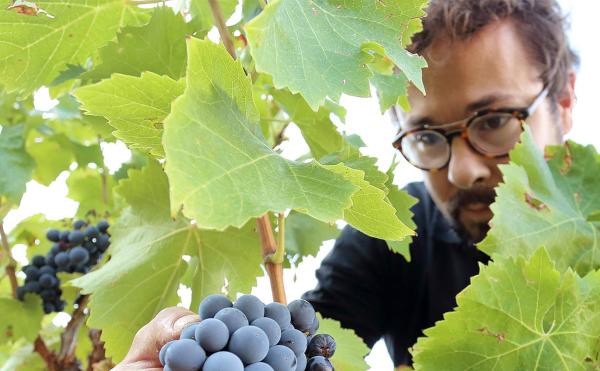 Masters of Wine y Rioja Alavesa