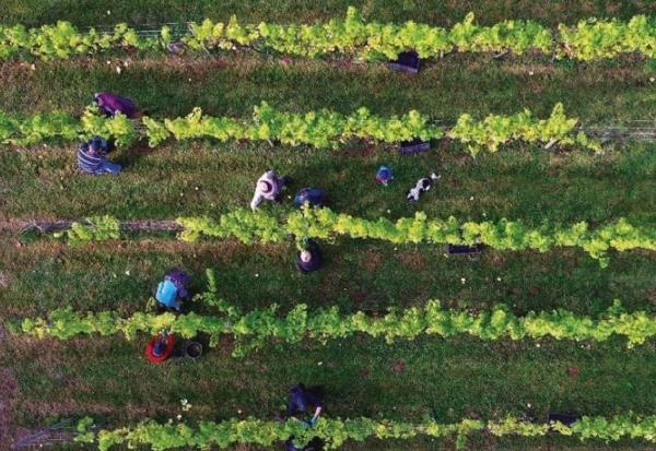 Instituto Vasco de Investigación y Desarrollo Agrario