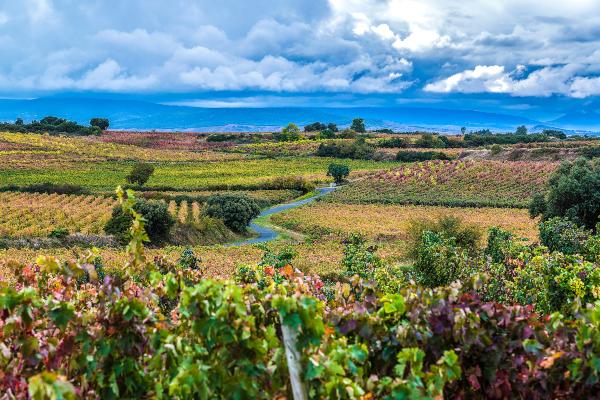 Vinos de 93 92 91 puntos Atkin Rioja Alavesa
