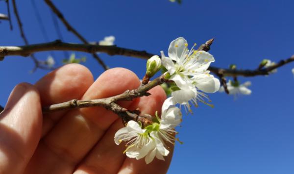 Flores-Arbol