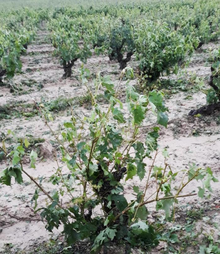 Tormenta en Rioja Alavesa