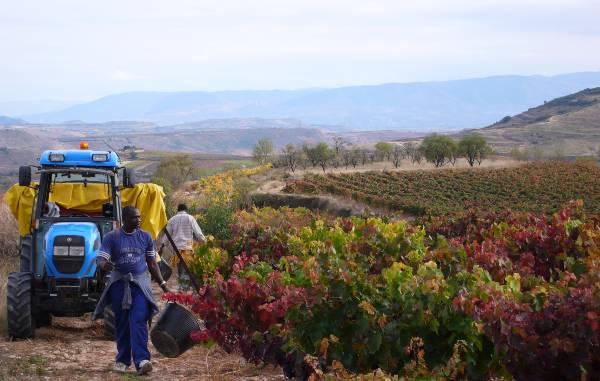 Vendimia 2020 en Rioja Alavesa