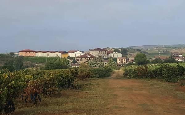 Viñedos y Bodegas de La Marquesa