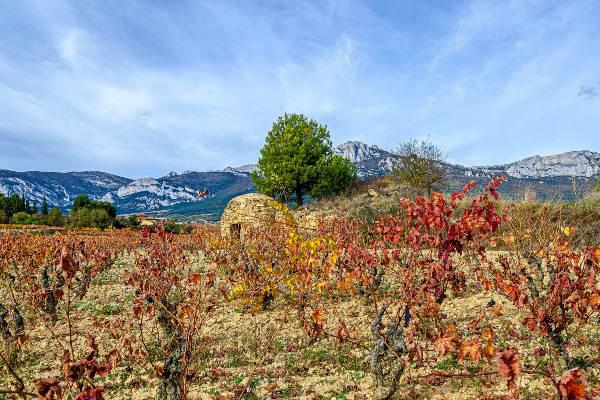 Rioja-Alavesa-Hoy