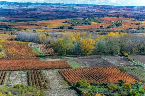 Vinas-Alavesa