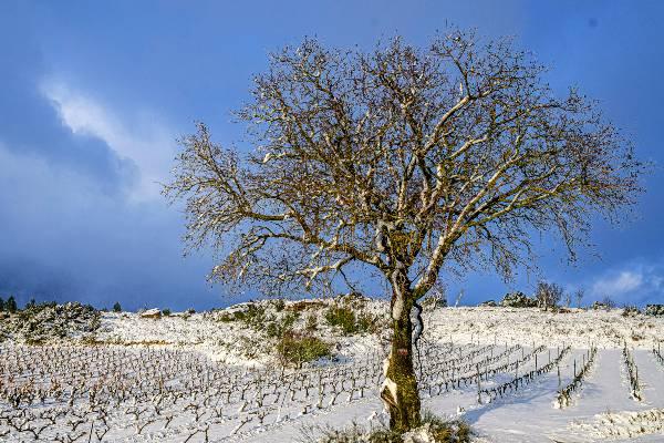 Nieva en Rioja Alavesa