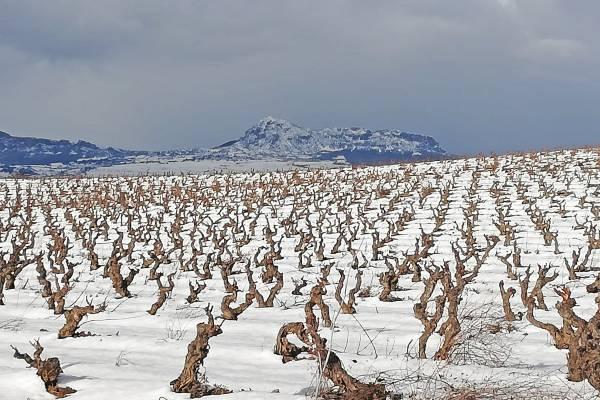 2021 en Rioja Alavesa