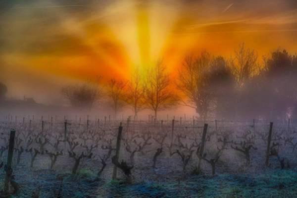 Niebla-Sol