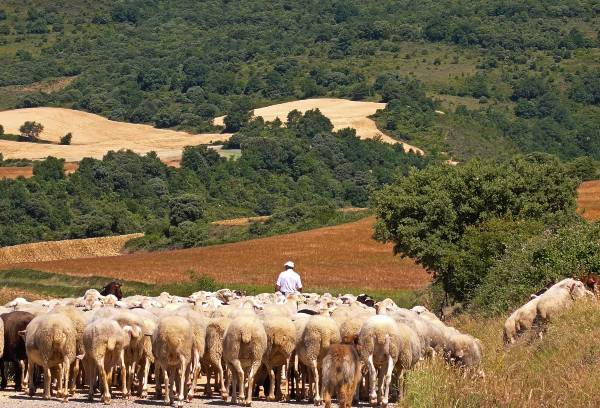 10-Labraza-ovejas
