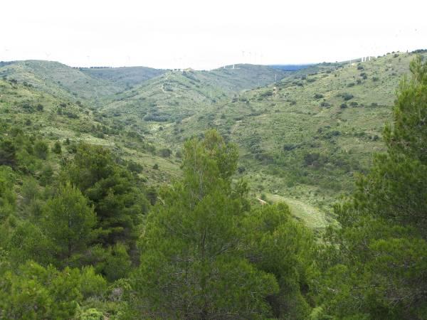 8-paisaje-primigenio