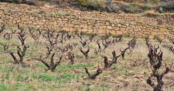 Vinedo-Muros