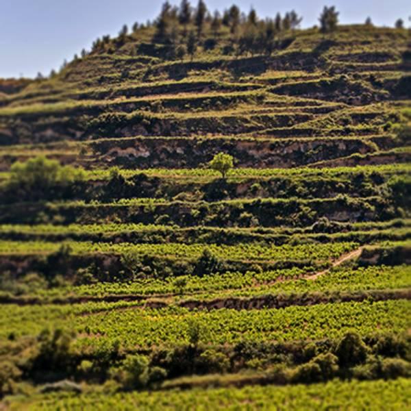 Vinedo-Terraza