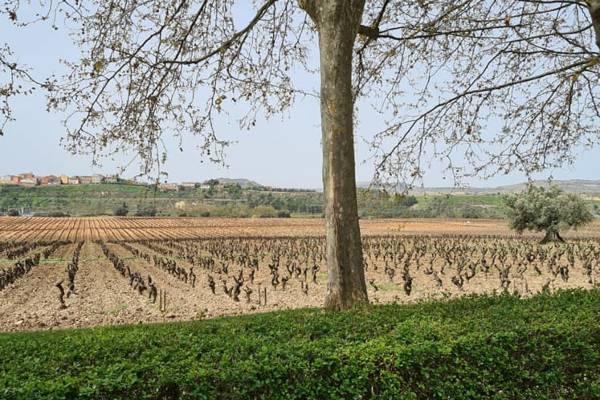 Vinas-Arboles