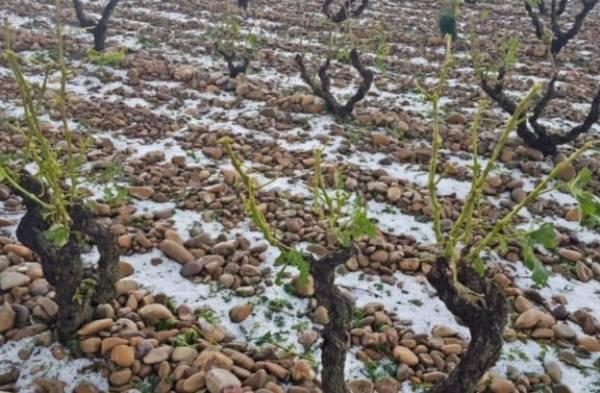 Granizo-Vinedo