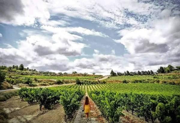 Vendimia 2021 en Rioja Alavesa